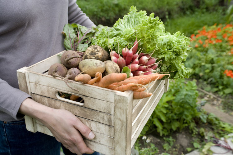 5 Reasons to Start Your Own Organic Vegetable Garden