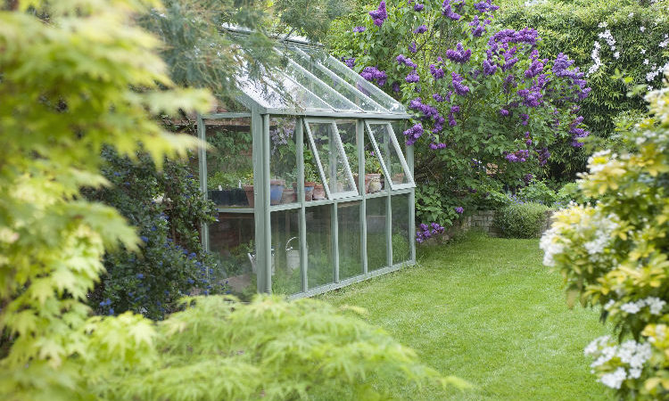 What to Grow in a Greenhouse